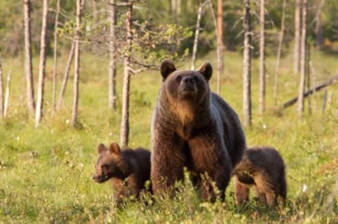 Bears do not kill people.