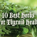 10 best herbs for thyroid healthbest herbs thyroid nation png