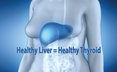 A-Healthy-Liver-Depends-On-A-Health-Thyroid-Gland