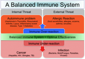 Th1-Th2-And-The-Connection-To-A-Balanced-Immune-System-thyroid-nation