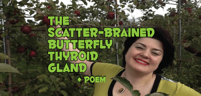 The-Scatter-Brained-Butterfly-Thyroid-Gland