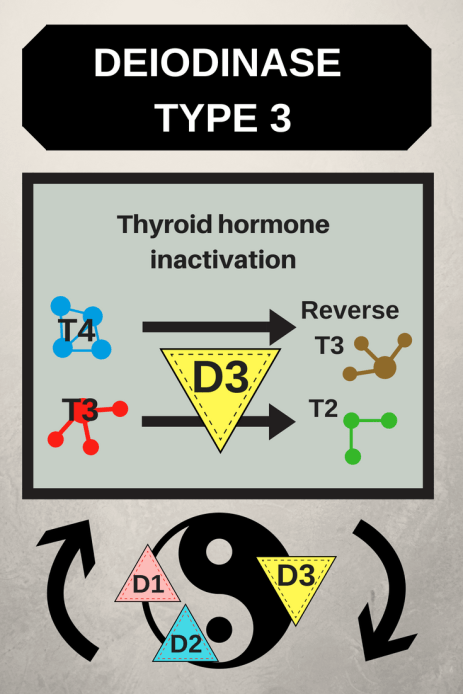 Deiodinase Type 3
