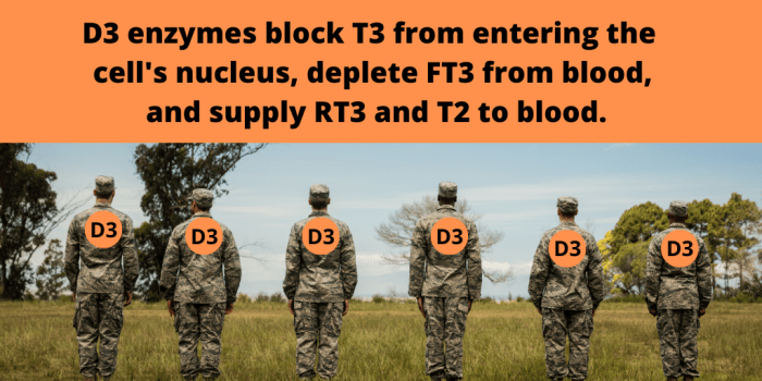 D3-enzymes-soldiers