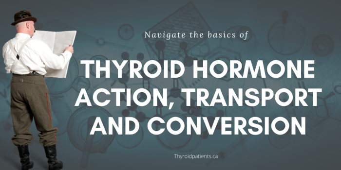 Thyroid hormone action, transport and conversion