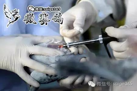 人藥鴿用的使用技巧 - 每日頭條