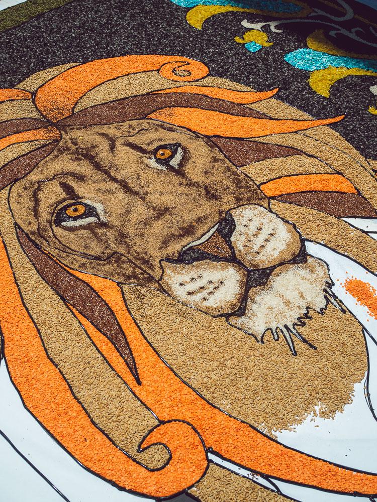 leone infiorata bolsena