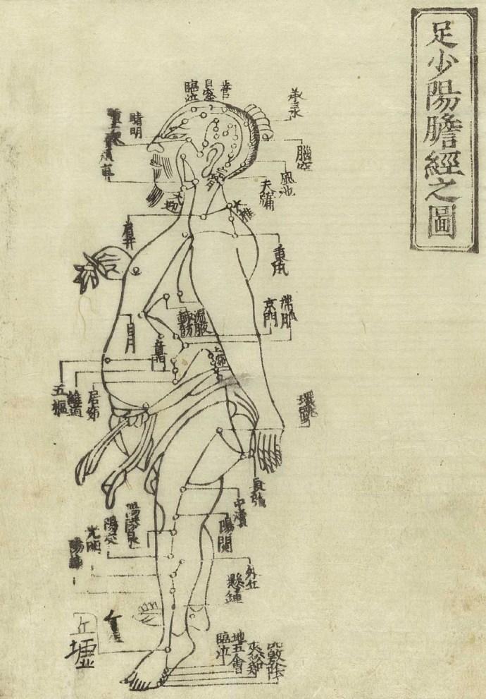 Gravure sur bois de Jushikei hakki de Hua Shou, 1716 montrant le méridien de la vésicule biliaire d'un homme debout, de profil, portant un pagne avec le méridiens indiqué sur la jambe et à la poitrine avec des caractères chinois donnant les noms des points