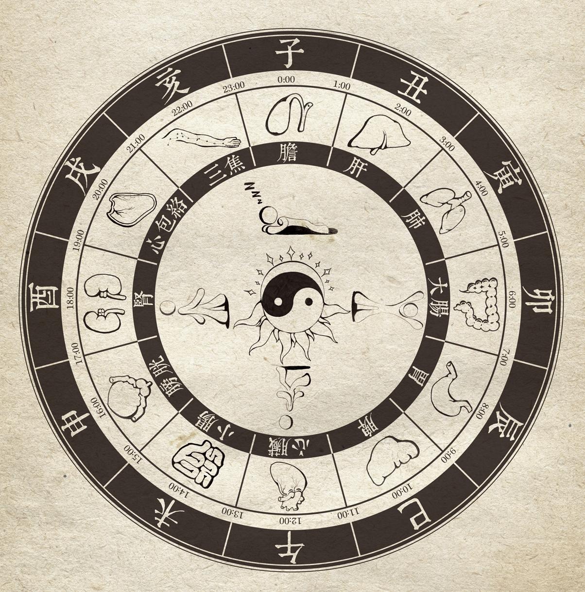 Schémas horloge biologique chinoise