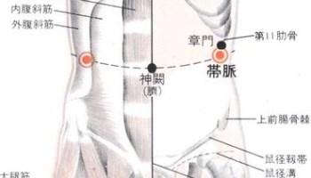 Le vaisseau de ceinture, 带脉 dài mài, relie tous les méridiens du tronc, il est le seul méridien horizontal.