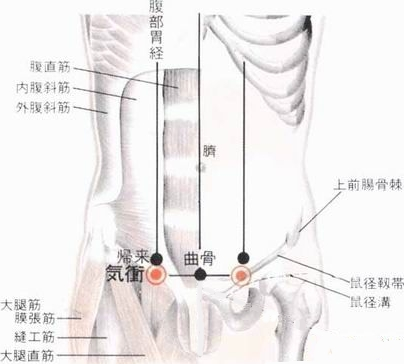 Assaut de l'énergie, 氣衝qì chōng, est le trentième point duméridien de l'estomac.
