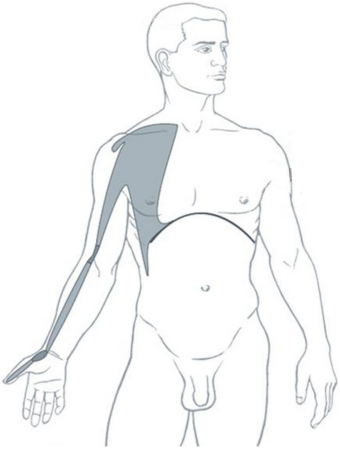Illustration du méridien tendino-musculaire du poumon