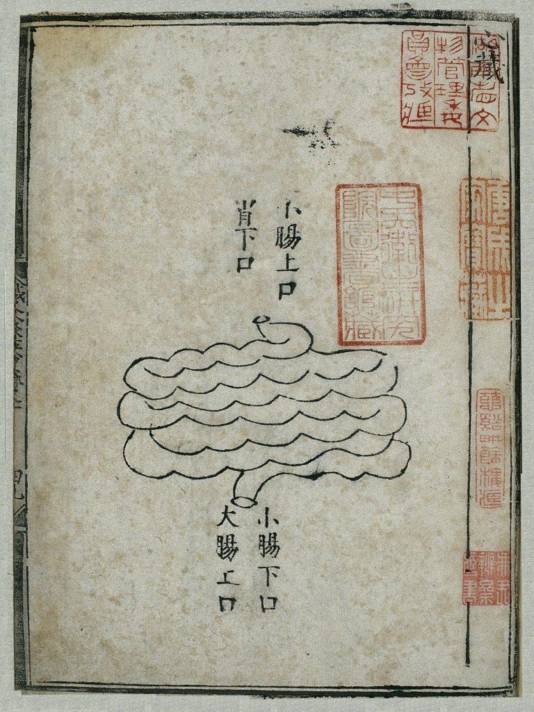 Gravure sur bois d'une édition de 1537 de l'intestin grêle