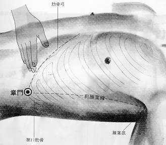 Porte des fortifications, 章門 zhāngmén, est le treizième point du méridien du foie.