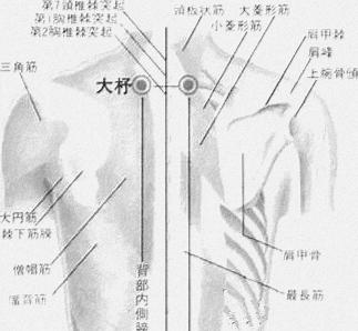 Grande navette, 大杼 dà zhù, onzième point du méridien de vessie
