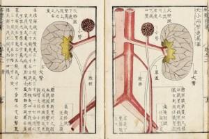 Explication de l'anatomie humaine, les reins, Kaitai hatsumo