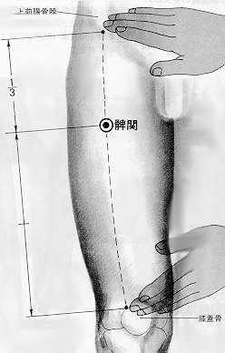 伏兔 fútù est le trente deuxième point du méridien de l'estomac