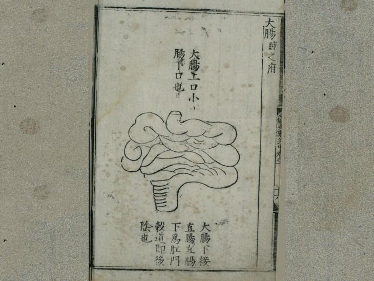 Anatomie du gros intestin dans la médecine traditionnelle chinoise ,  édition publiée en 1537