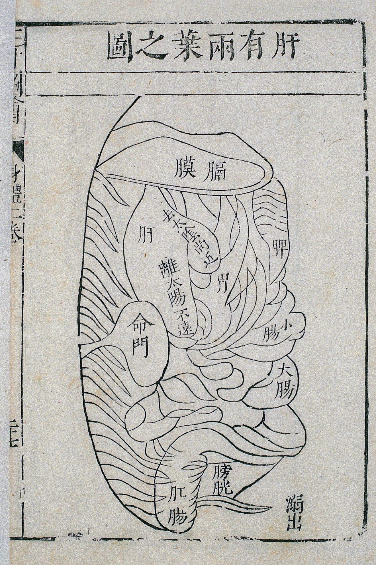 Forme et position du foie, illustration de la gravure sur bois du Compendium illustré des Trois Talents sur le corps