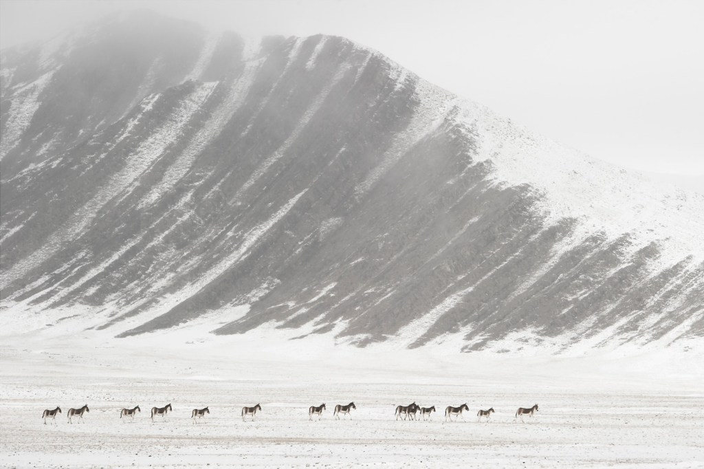 Tibet, promesse de l'invisible, Vincent Munier.