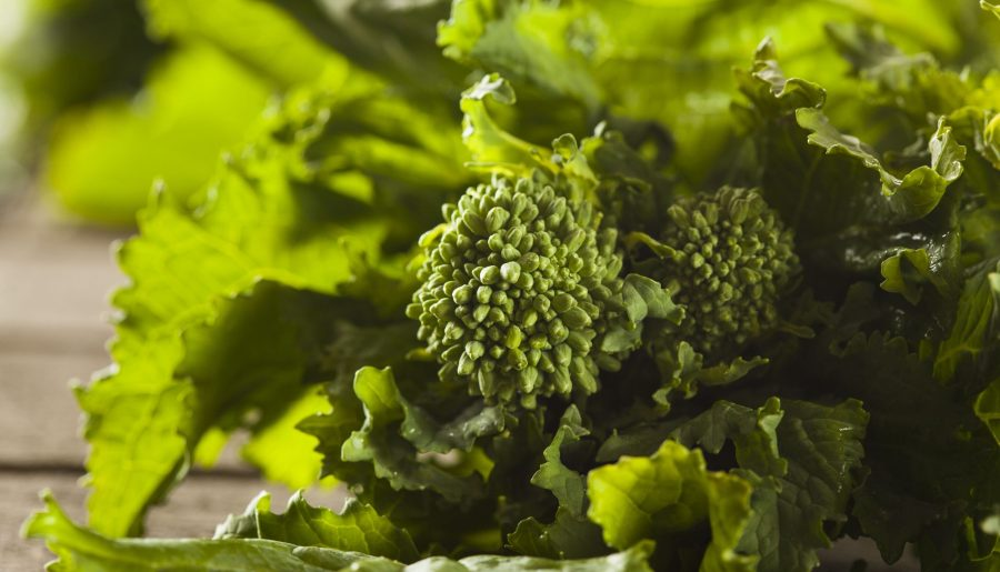 Le brocoli-rave ou rapini (Brassica ruvo) est une espèce de la famille des Brassicaceae.
