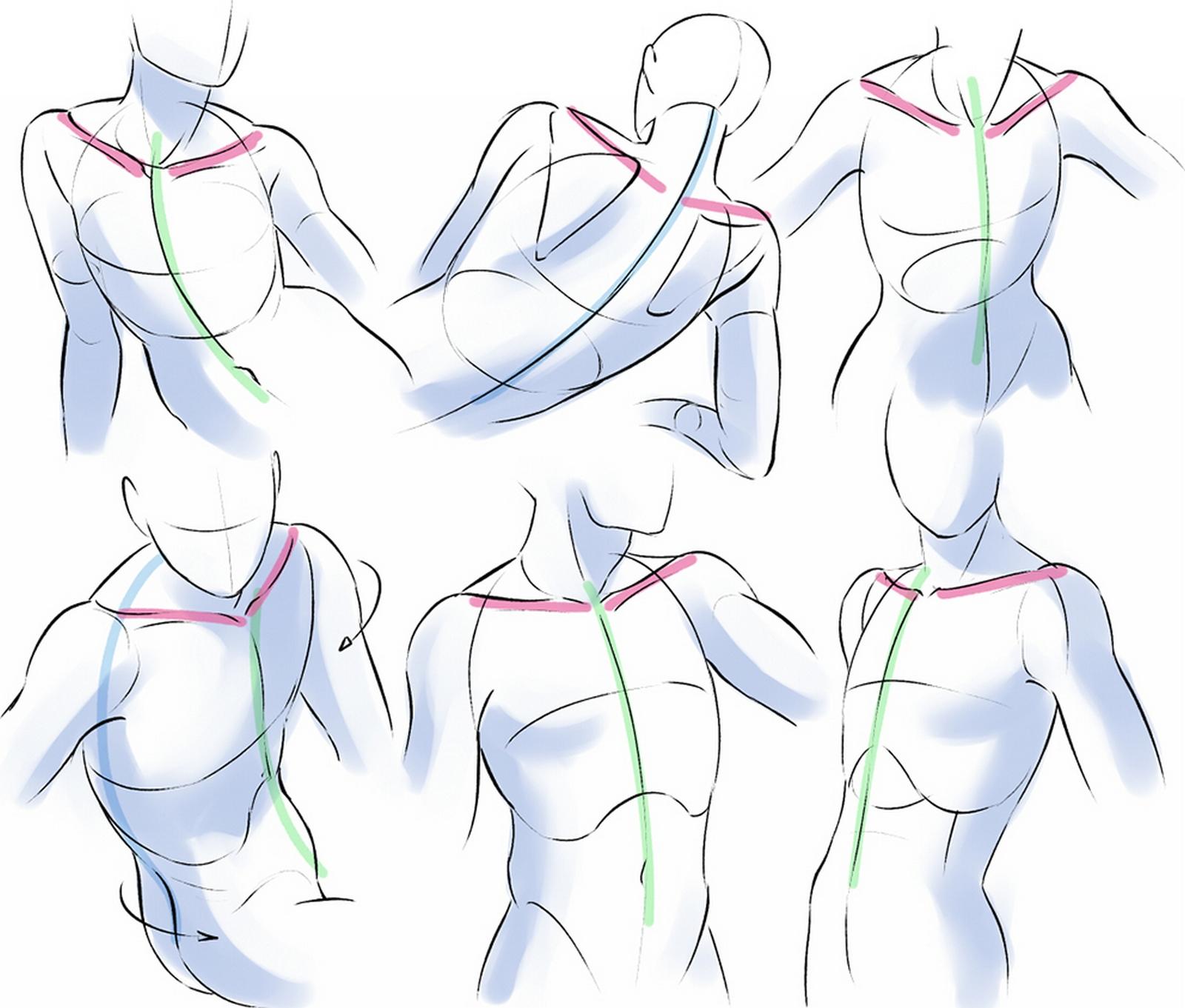 Apprendre de l'anatomie