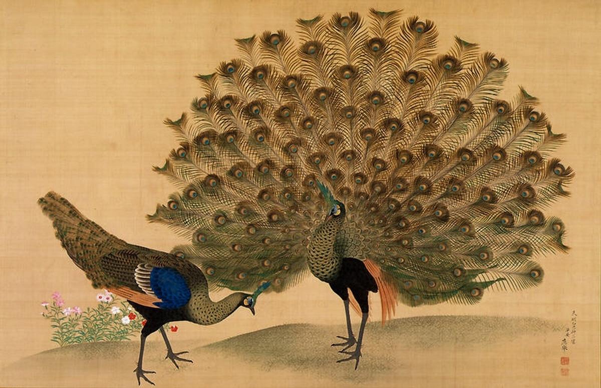 Paon et pivoines, 1781, encres et couleurs sur soie, Maruyama
