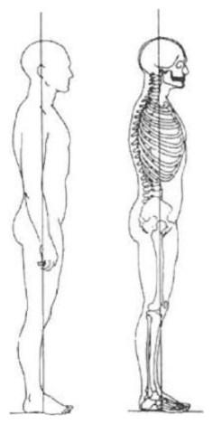 Illustration de la position orthostatique en fonction de la verticale gravitaire relative aux principales articulations