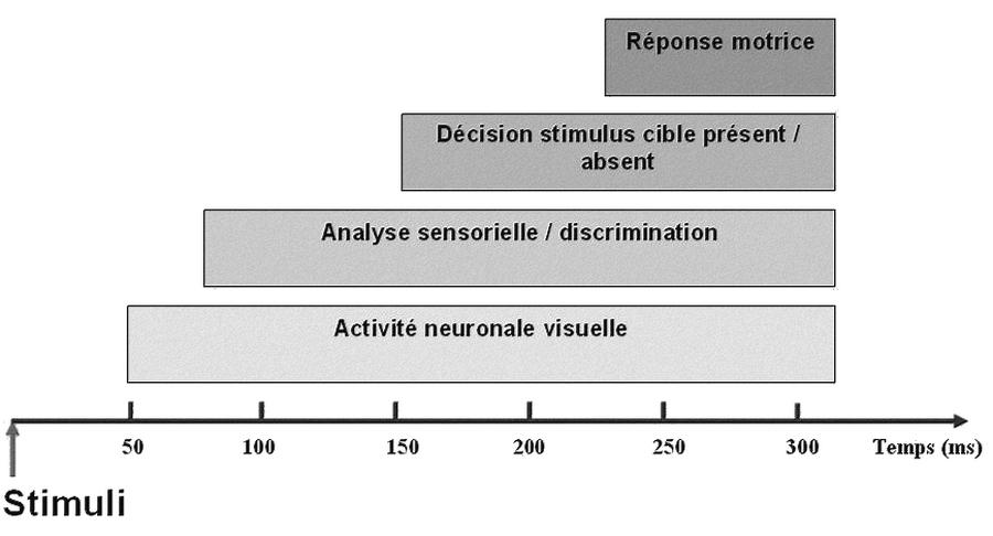 Le temps de réaction à une stimulation visuelle, étape par étape
