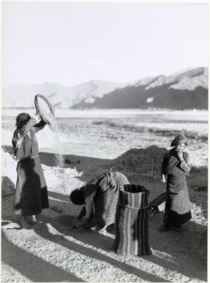 Woman winnowing barley