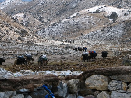 Yak train heading to Everest in Nepal, photo by McKay Savage