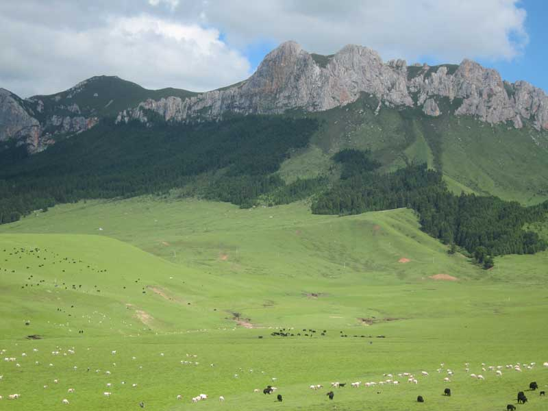 Zoige County
