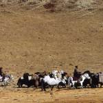sershul-nomads