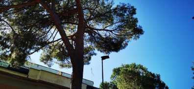 ramo albero 4