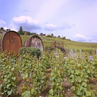 The Vineyard Terraces of Switzerland