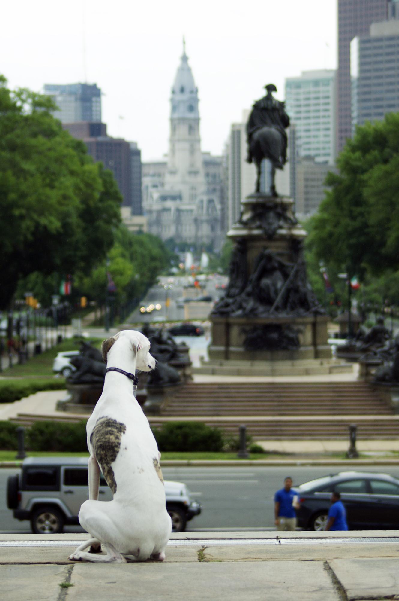 Artpup Dog Walk Amp Public Art Tour Tickets In Philadelphia