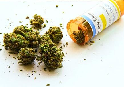 Marijuana and drug citations