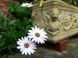 Beautiful Details - Horsham Museum Garden