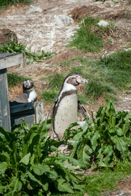 Penguins in the sun