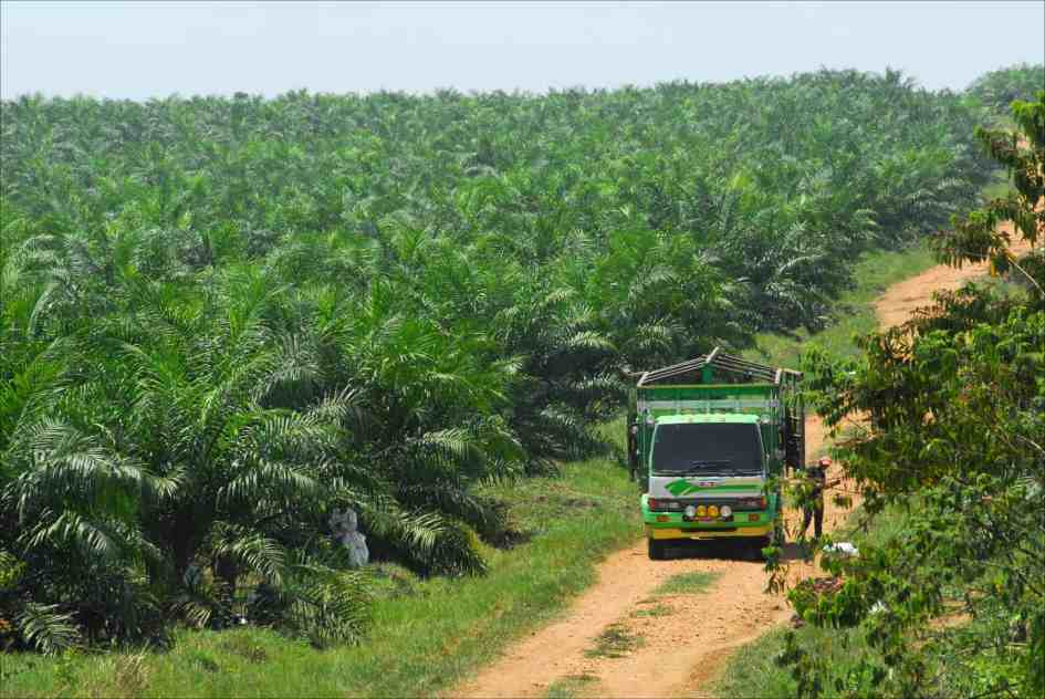 Palm oil: Guatemala's newest, biggest cash crop? -
