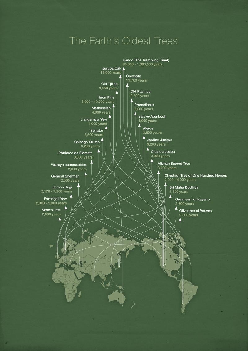 Los árboles más viejos de la Tierra