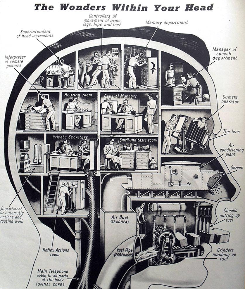 Cómo funciona nuestro cerebro