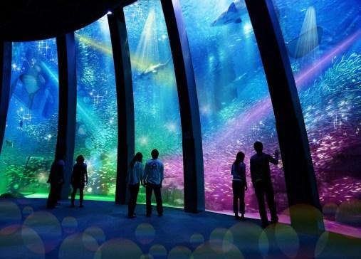 Super Sardine Illumination show