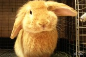 คาเฟ่กระต่าย