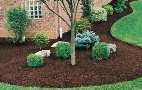 Expert Summer Tree Tip-Mulching for summer months