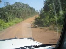 Road through the bush.