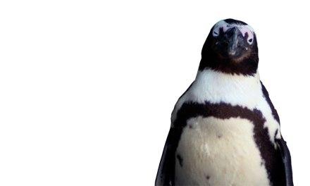 Dagens skrivtips: Släng in en pingvin