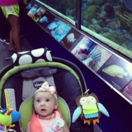 First trip to the aquarium!