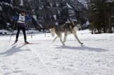 Skijöring mit Malamut. Musher: M. Tobler (SUI)
