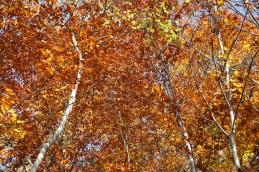Leuchtende Herbstfarben