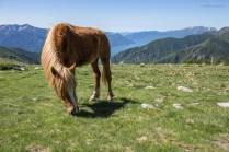 Pferd auf der Alpe Bardughè